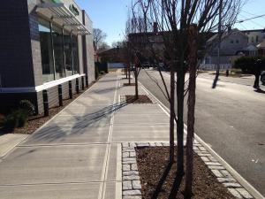 IMG 0370 (3)City Tree Pits